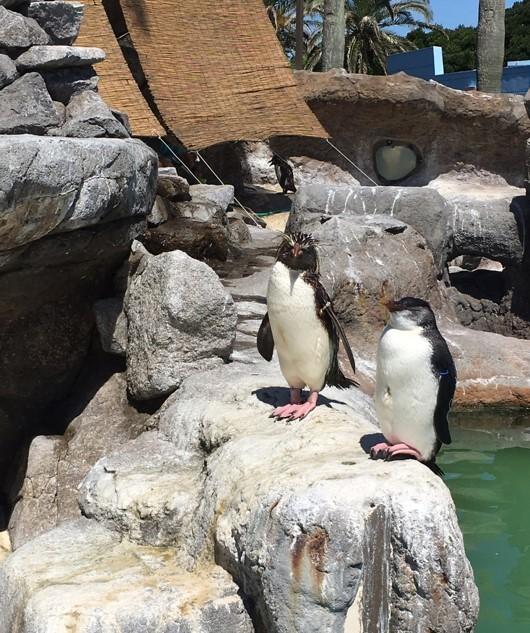 油壷マリンパークのペンギン
